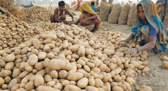 953489816-potatofarmers_6