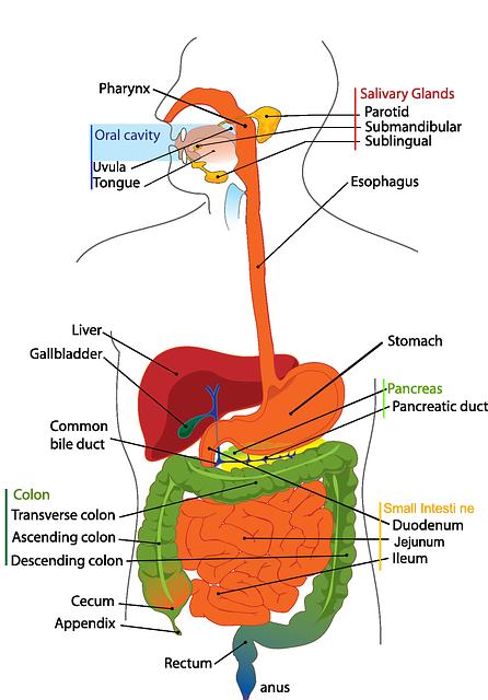 digestive-41529_640