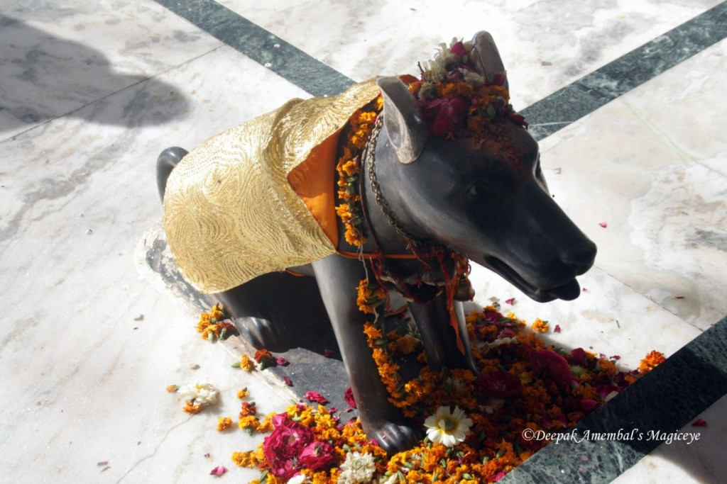 ujjain dog outtemple [Desktop Resolution]
