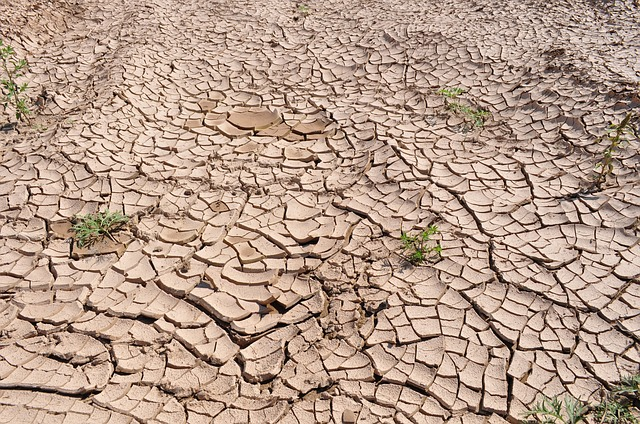 drought-19478_640