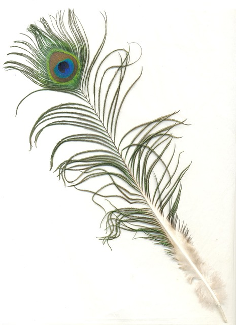peacock-feather-577926_640
