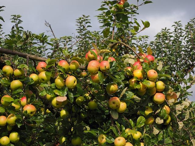 apple-694203_640